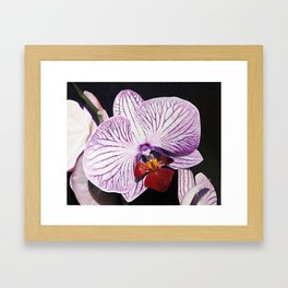 Purple Orchid Framed Art Print