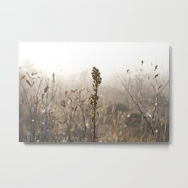Fall in West Virginia  Metal Print