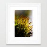 moss Framed Art Prints featuring Moss by Digital Dreams