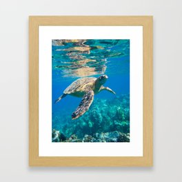 Large Sea Turtle, Marine Turtle, Chelonioidea, reptile animal swimming in clear and clean water Framed Art Print