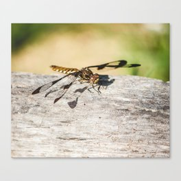 Hello Dragonfly Canvas Print