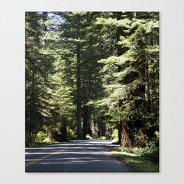 Humboldt State Park Road Canvas Print