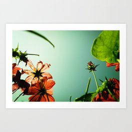 Withering up and away! Art Print