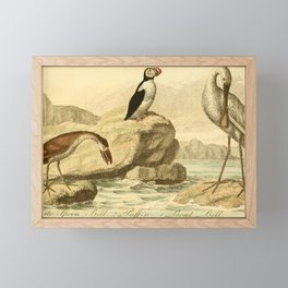 Vintage Print - Bullock's London Museum & Pantherion (1812) - Spoonbill; Puffin; Boatbill Framed Mini Art Print