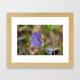 small blue flower in the forest Framed Art Print