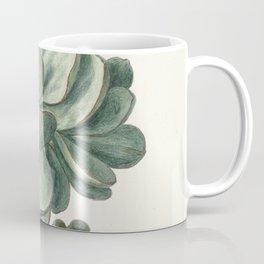 Herman Saftleven - Succulent (probably a Cotyledon orbiculata) - 1683 Coffee Mug
