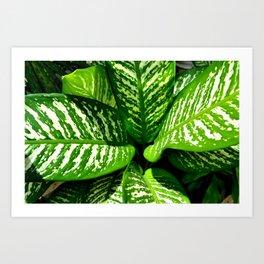 Tropic Series II Art Print