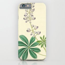 Flower 1230 lupinus arbustus Half shrubby Lupine14 iPhone Case