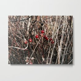 Thorned Berries of Winter Metal Print