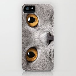 Cat in Grey iPhone Case