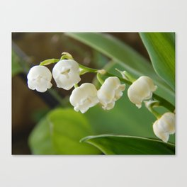 Bell flowers Canvas Print