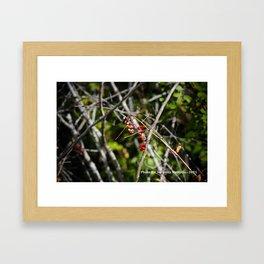 The Berry Bunch Framed Art Print
