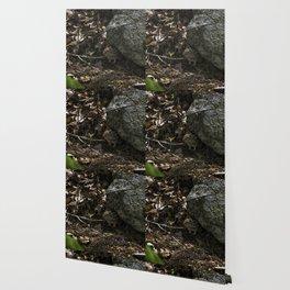 chipmunk playing hide and seek Wallpaper