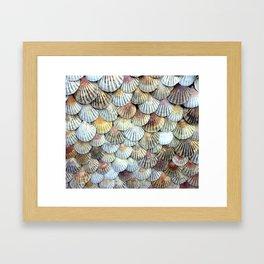 Cockleshell Collection Framed Art Print