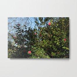 Camellia Bush Metal Print