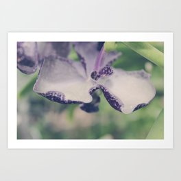 Purple Vanda Orchid Detail Art Print