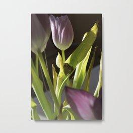 Shadowed Tulip Metal Print