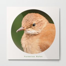 Brown Bird - Furnarius Rufus  Metal Print