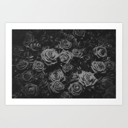 The Roses (Black and White) Art Print