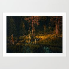 Drying out in the sun Art Print