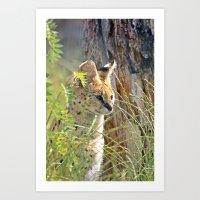 serval in grass Art Print