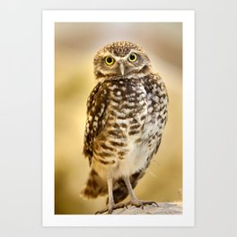 Burrowing Owl 1 Art Print