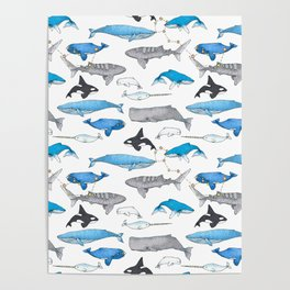 Whale Constellation Poster