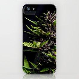 Purple Cannabis Plant iPhone Case