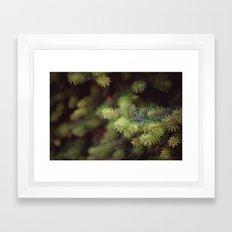 evergreen Framed Art Print