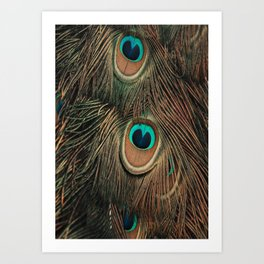 Peacock feathers abstract II Art Print