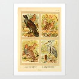 Capercaillie Gray Partridge Common Quail Common Heron8 Art Print