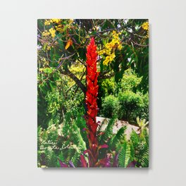 Alpinia purpurata – Red Ginger Flower, Nature in Bogota, Colombia Metal Print