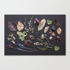 Botanical Collection Canvas Print