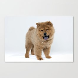Chow Chow Puppy Canvas Print