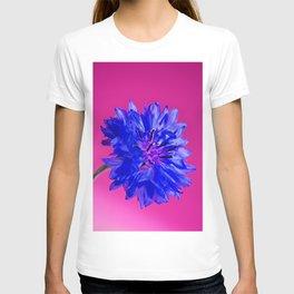 Macro shot of blue fresh cornflower on the pink background T-shirt