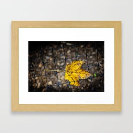 Caged Leaf Framed Art Print