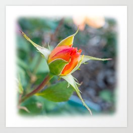 Rose Bud - Tea with Roses Art Print