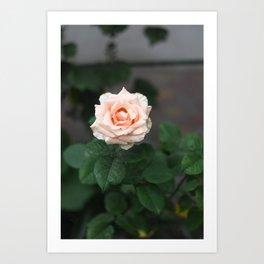 Flower Photography by Raspopova Marina Art Print