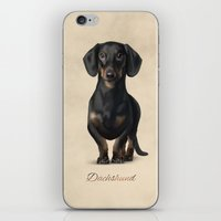 dachshund iPhone & iPod Skins featuring Dachshund by Gosia