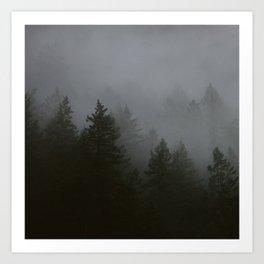 Fog + Pine Trees Art Print