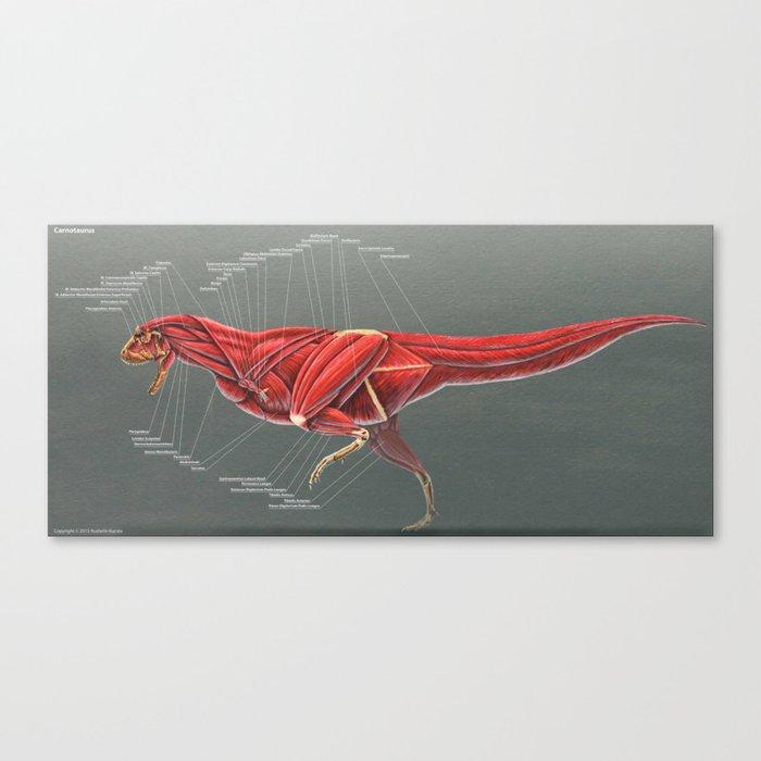 Carnotaurus Muscle Study Canvas Print