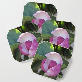 A Fig Prefigured Coaster