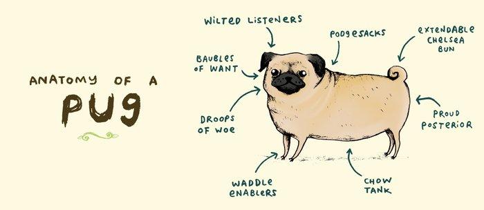 Anatomy of a Pug Kaffeebecher