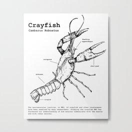 Crayfish Metal Print