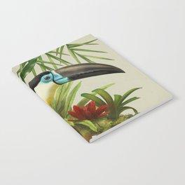 Channel- billed toucan vintage illustration. Notebook