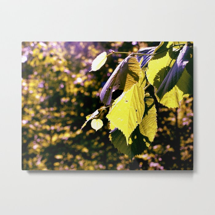 Let The Sun Shine Metal Print