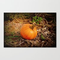 pumpkin Canvas Prints featuring Pumpkin by Amy Anderson