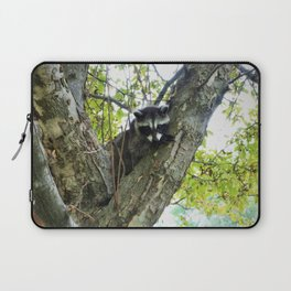 Baby Raccoon on a tree Laptop Sleeve