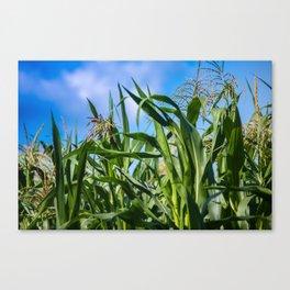 Corn Field Blue Sky Close-up Canvas Print