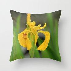 Yellow Flag Iris Throw Pillow